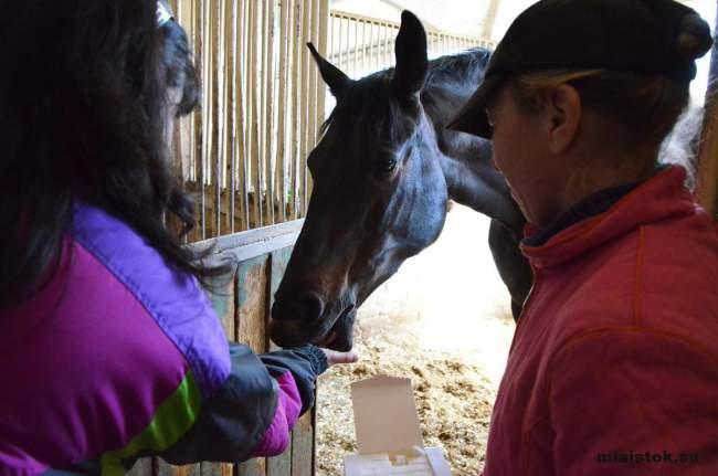 Жители Луганска помогают конно-спортивной школе