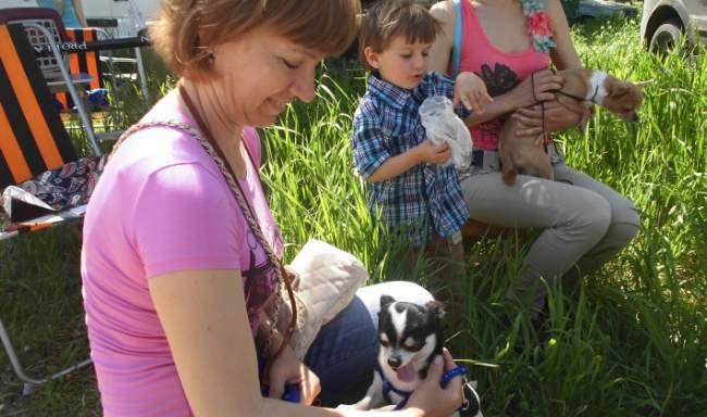 Фоторепотаж. Выставка собак прошла в Луганске.