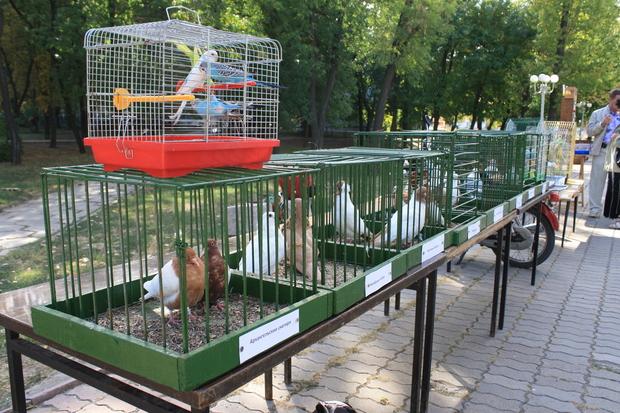 Выставка голубей, певчих и декоративных птиц прошла в Луганске (ФОТО)