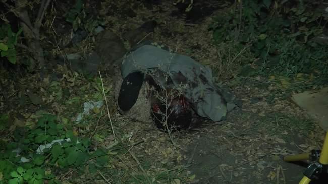 Жестокое убийство «крысы»