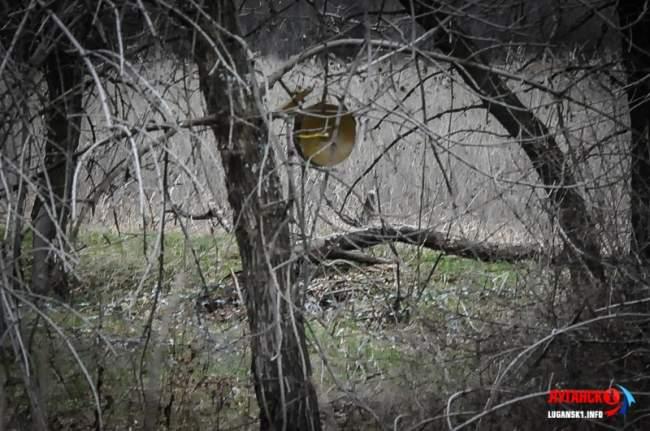 Фоторепортаж о нарушениях украинской стороной Минских договоренностей