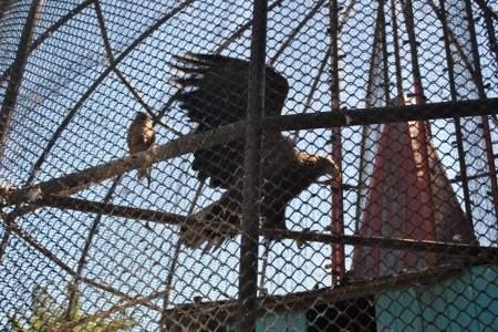 Луганский зооуголок парка имени 1 Мая ждет новоселов